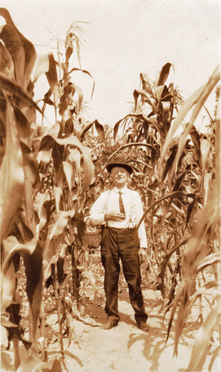 J F Jones picking corn
