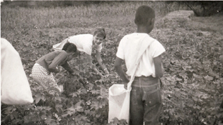 Christa Picking Cotton2
